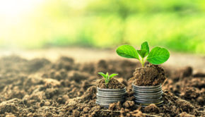43042529 - golden coins in soil with young plant. money growth concept.